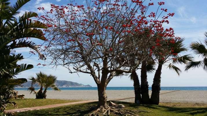 Bungalow tipo: Plus en el Camping Playa de Poniente